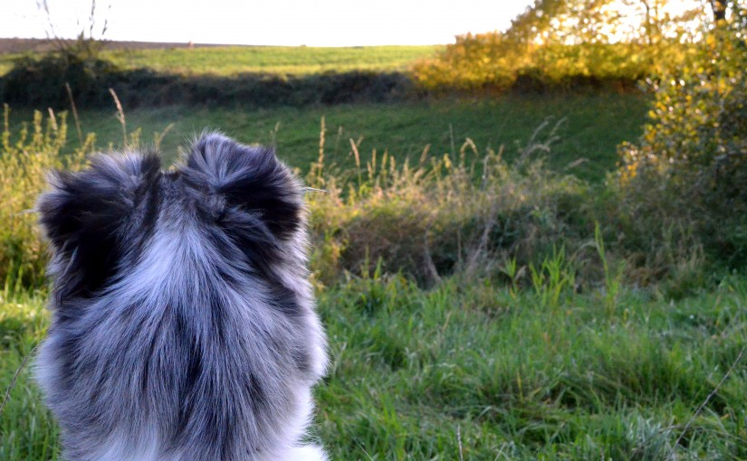 Bella schaut in die Ferne.